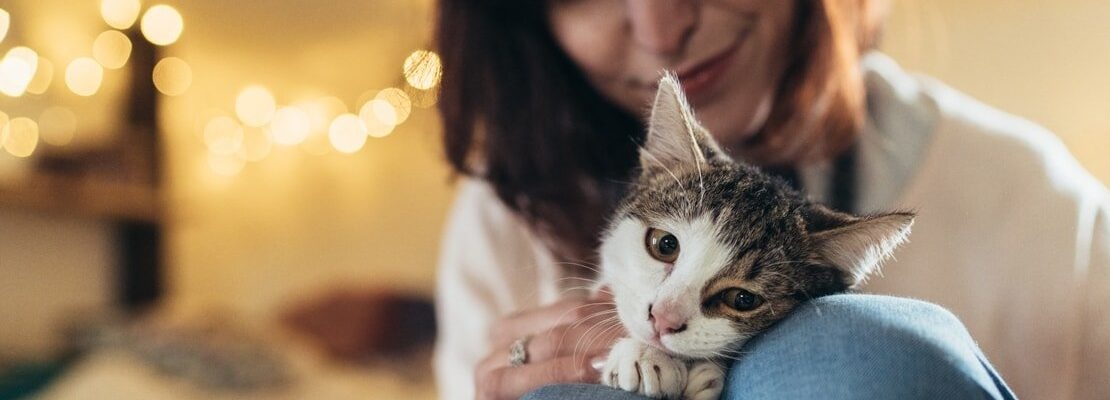 Tips for First Time Cat Owners